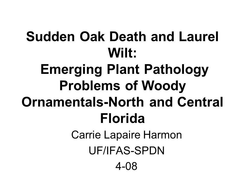 Carrie Lapaire Harmon UF/IFAS-SPDN 4-08