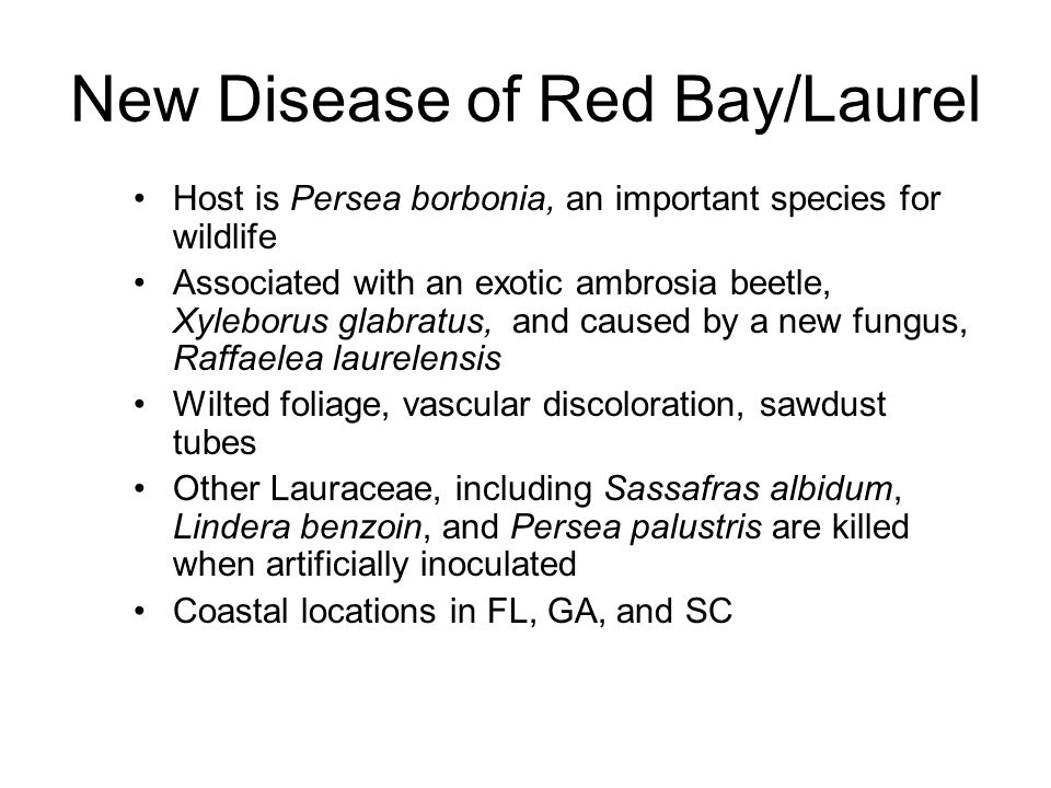 New Disease of Red Bay/Laurel