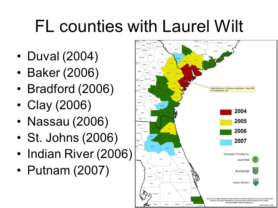 FL counties with Laurel Wilt