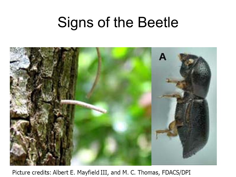 Signs of the Beetle