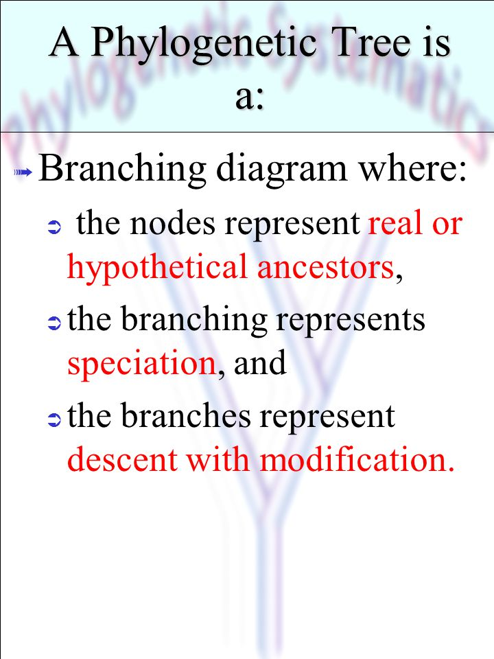 A Phylogenetic Tree is a: