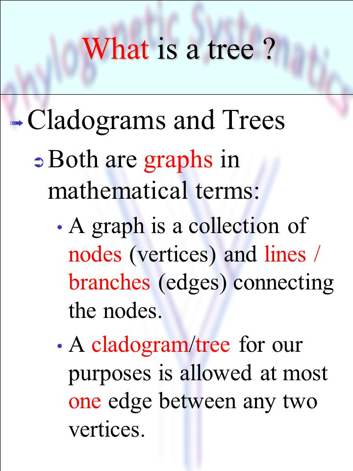 What is a tree Cladograms and Trees