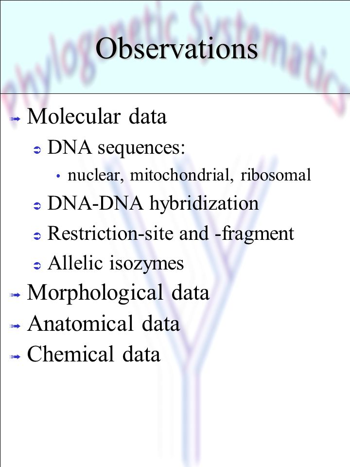 Observations Molecular data Morphological data Anatomical data