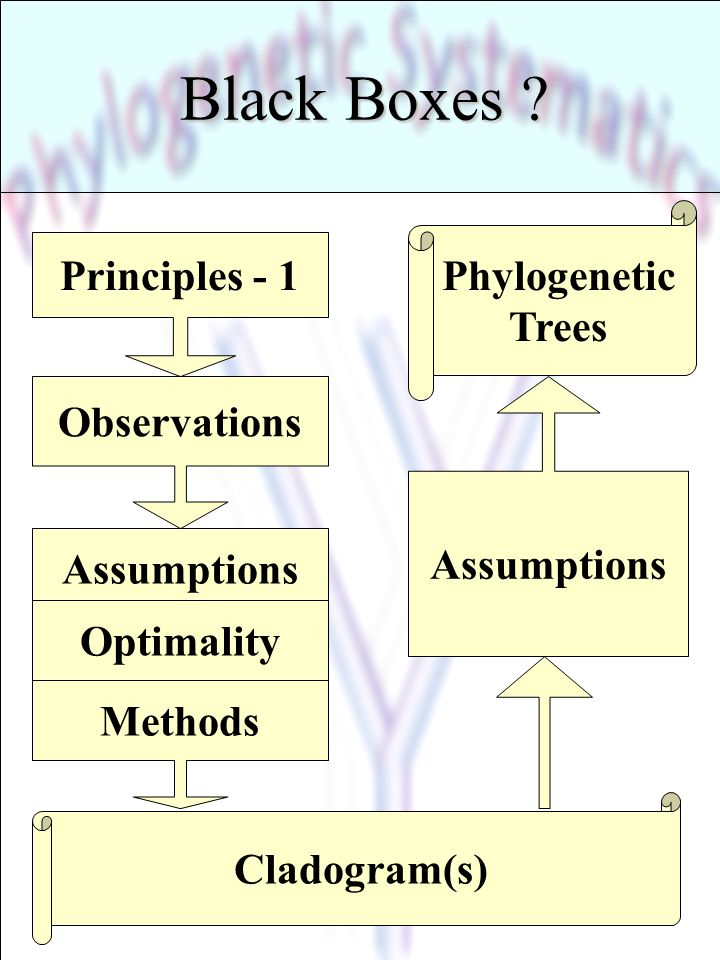 Black Boxes Phylogenetic Principles - 1 Trees Observations