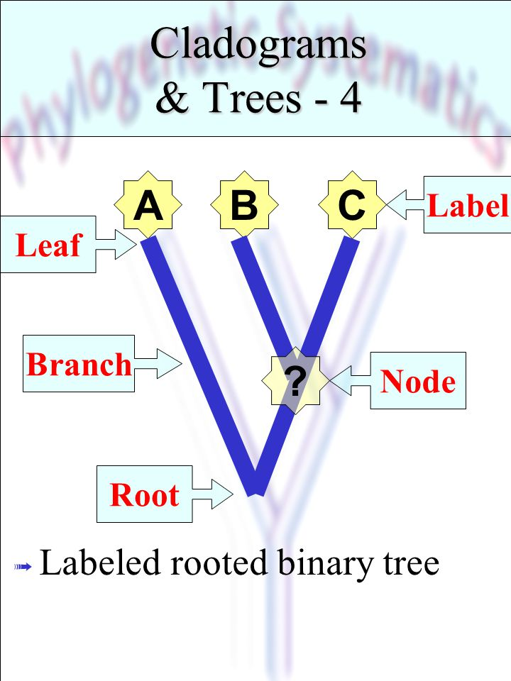 Cladograms & Trees - 4 C A B Labeled rooted binary tree Label Leaf