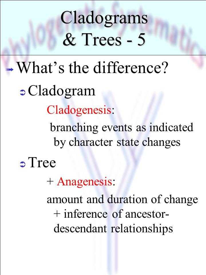 Cladograms & Trees - 5 What's the difference Cladogram Tree