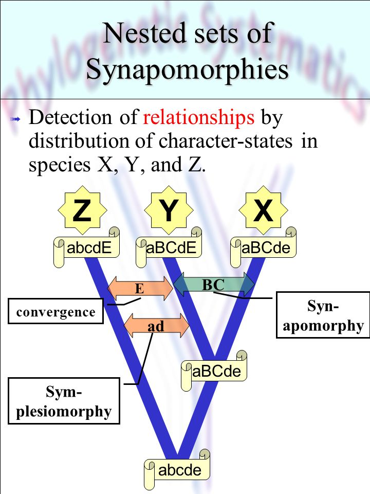 Nested sets of Synapomorphies