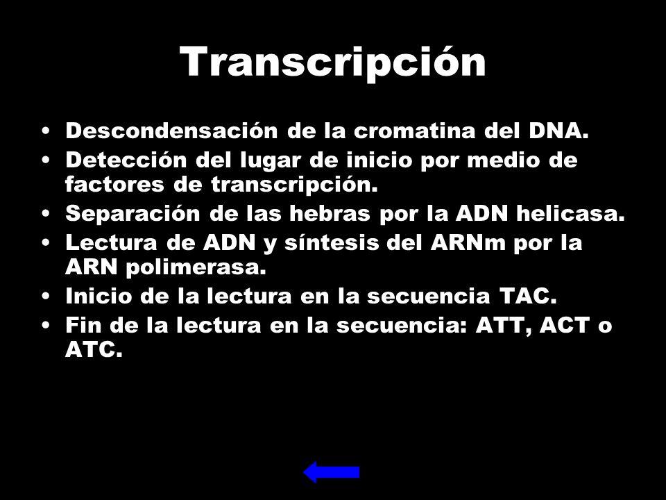 Transcripción Descondensación de la cromatina del DNA.
