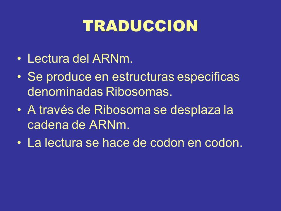 TRADUCCION Lectura del ARNm.