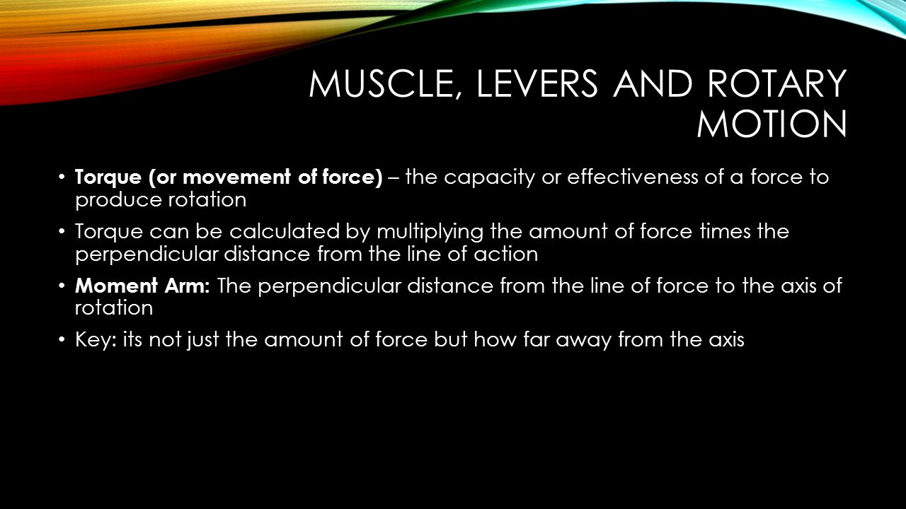 Muscle, Levers and Rotary Motion