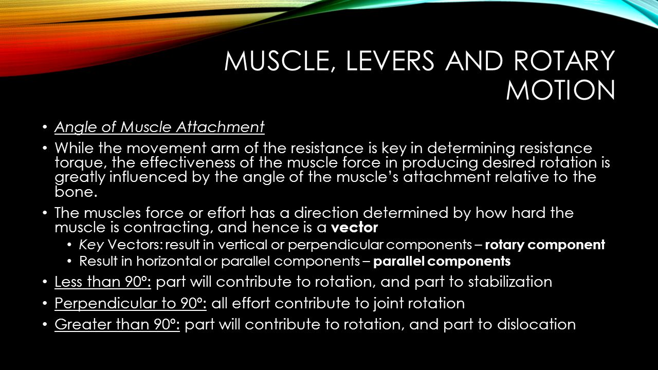 The Physiology of Skeletal Muscle Contraction