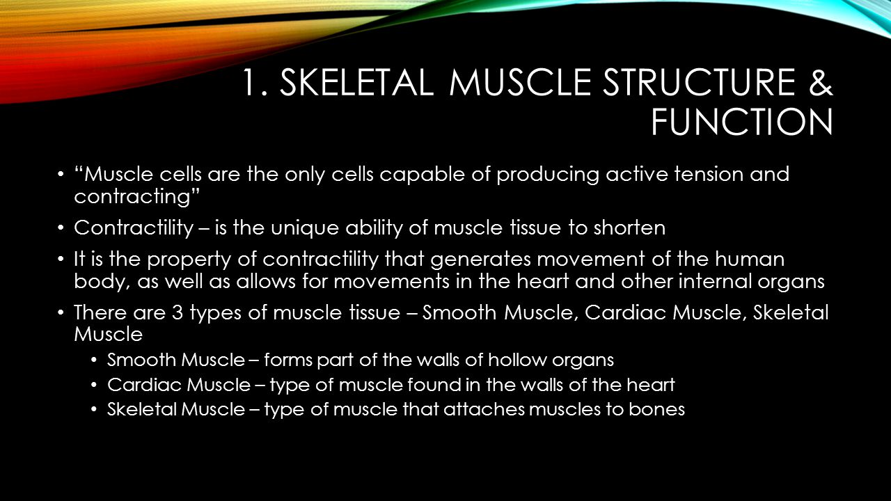 1. Skeletal Muscle Structure & Function
