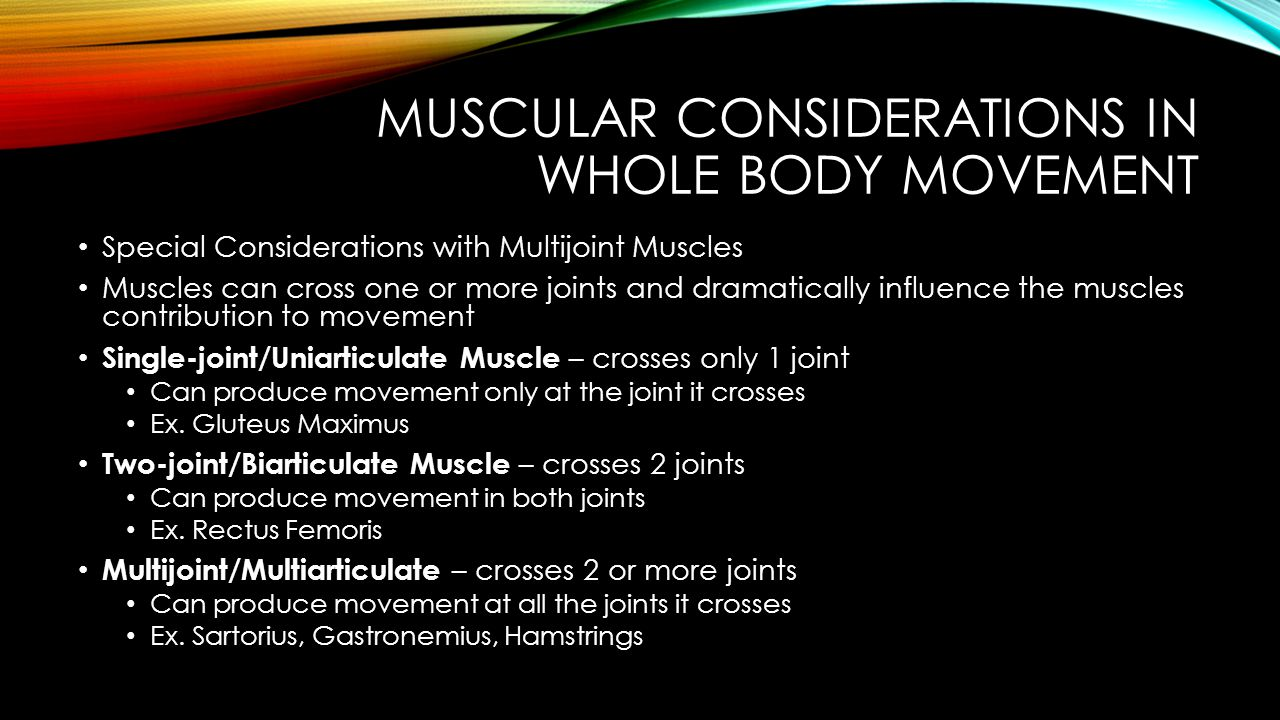Muscular Considerations in Whole body movement