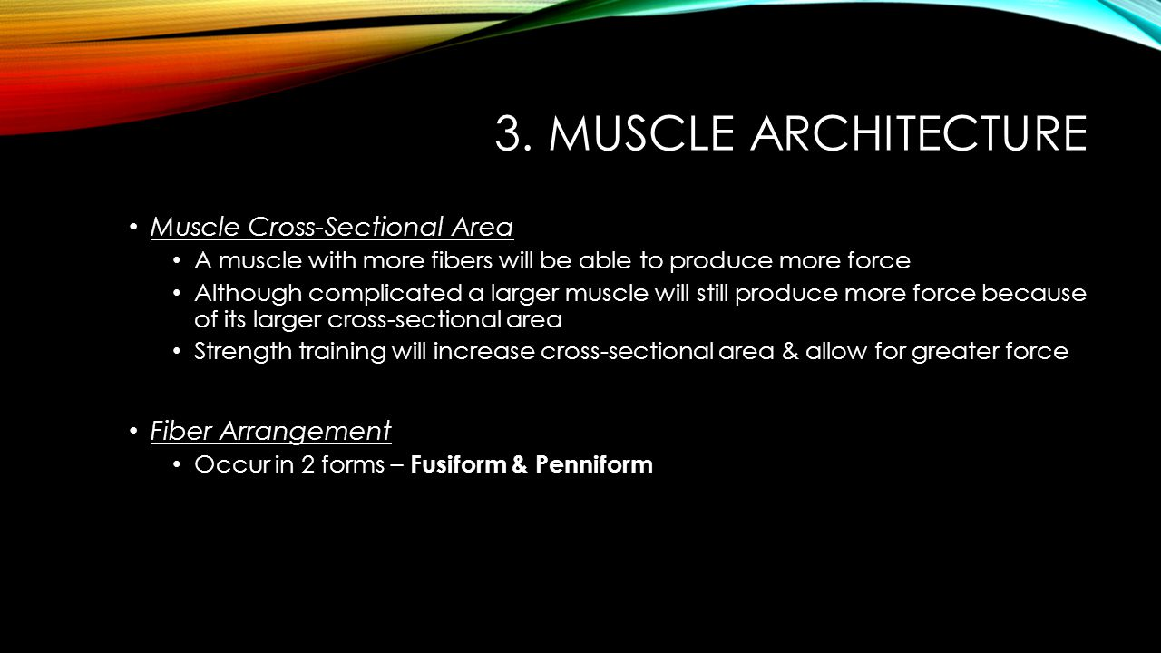 3. Muscle Architecture Muscle Cross-Sectional Area Fiber Arrangement