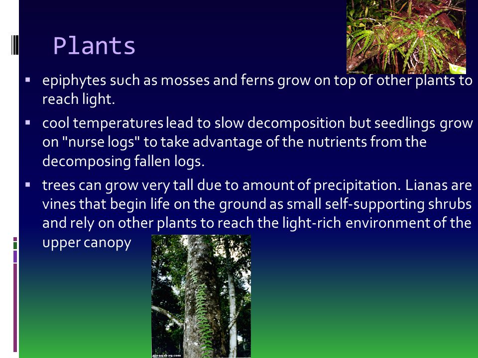 Plants epiphytes such as mosses and ferns grow on top of other plants to reach light.
