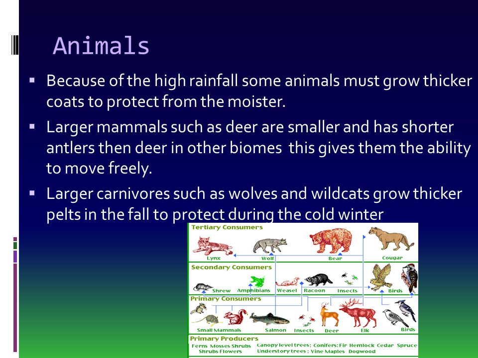 Animals Because of the high rainfall some animals must grow thicker coats to protect from the moister.