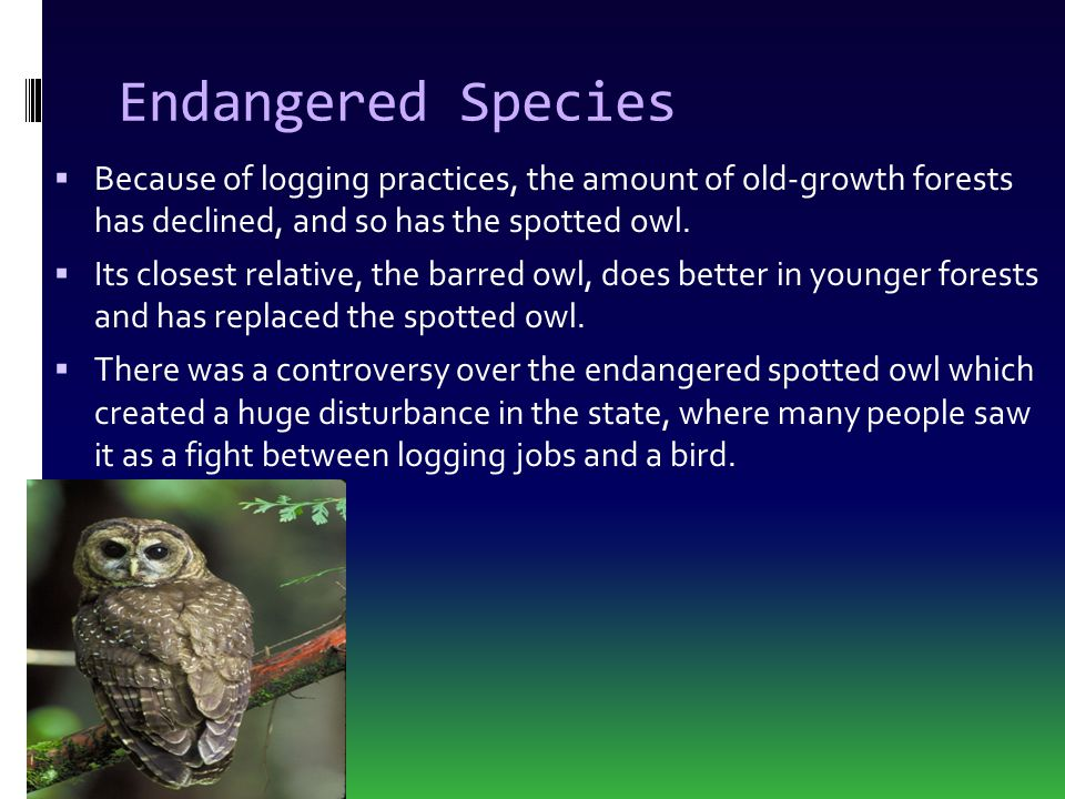 Endangered Species Because of logging practices, the amount of old-growth forests has declined, and so has the spotted owl.