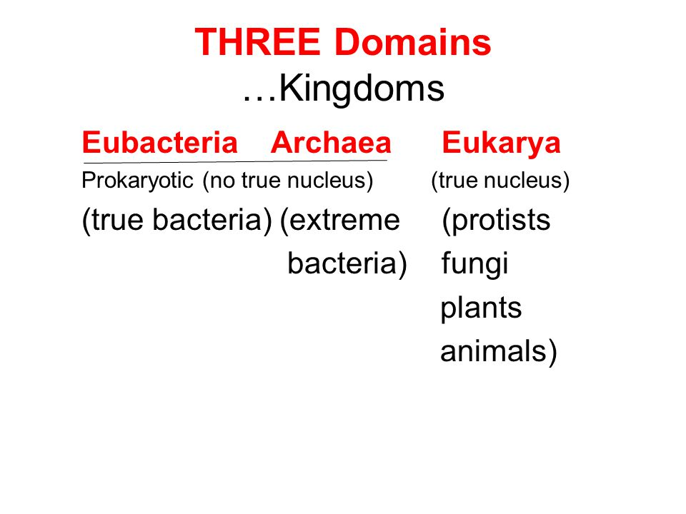 THREE Domains …Kingdoms