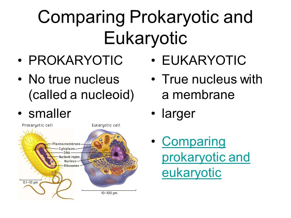 Comparing Prokaryotic and Eukaryotic