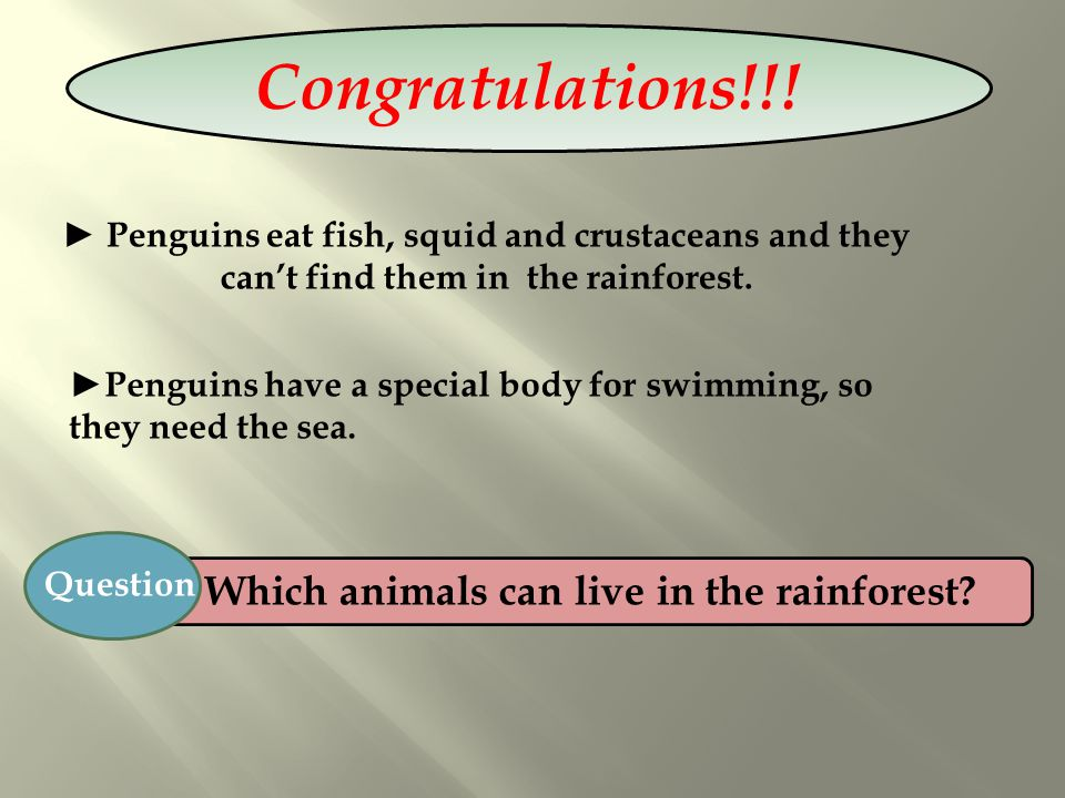 Which animals can live in the rainforest