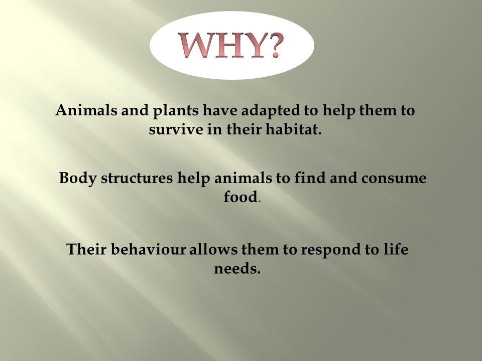 Their behaviour allows them to respond to life needs.