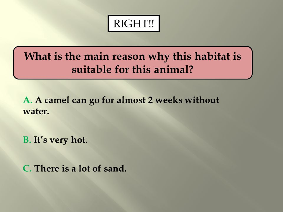 What is the main reason why this habitat is suitable for this animal