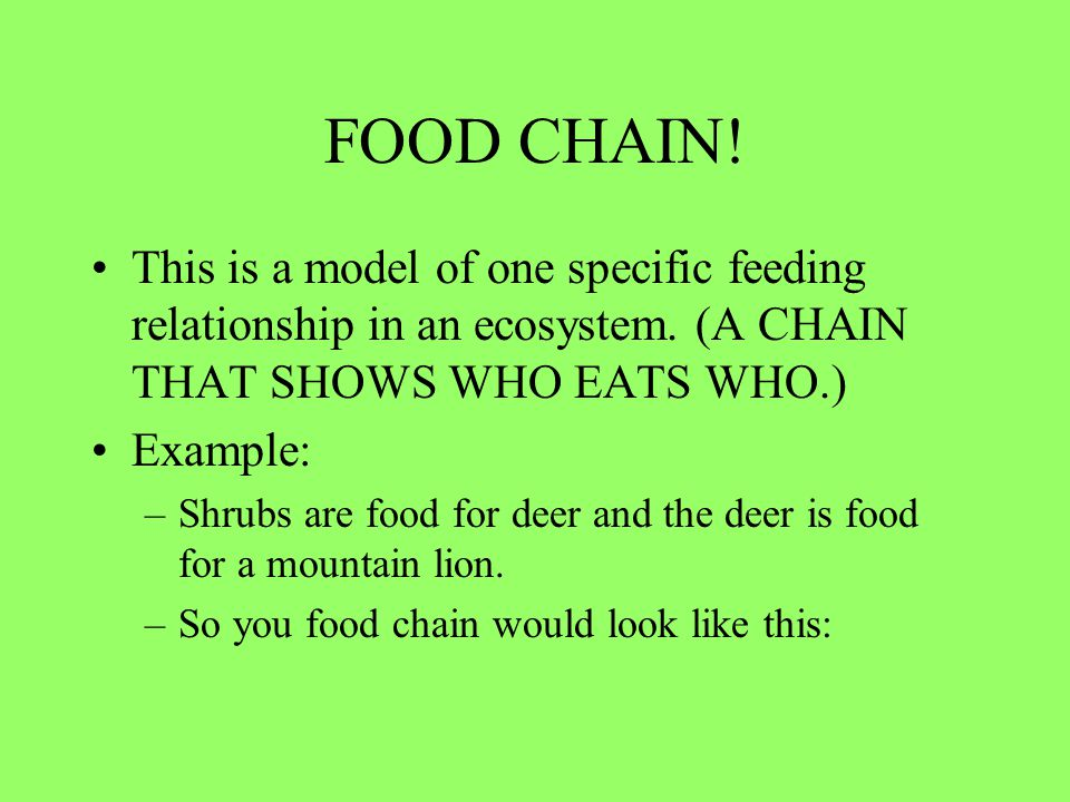 FOOD CHAIN! This is a model of one specific feeding relationship in an ecosystem. (A CHAIN THAT SHOWS WHO EATS WHO.)