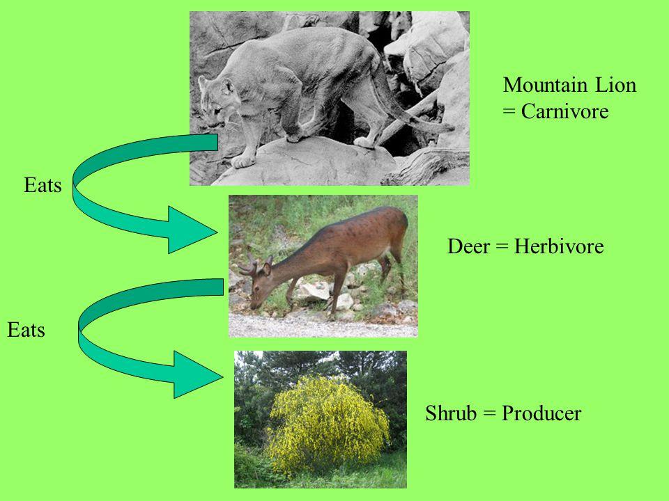 Mountain Lion = Carnivore