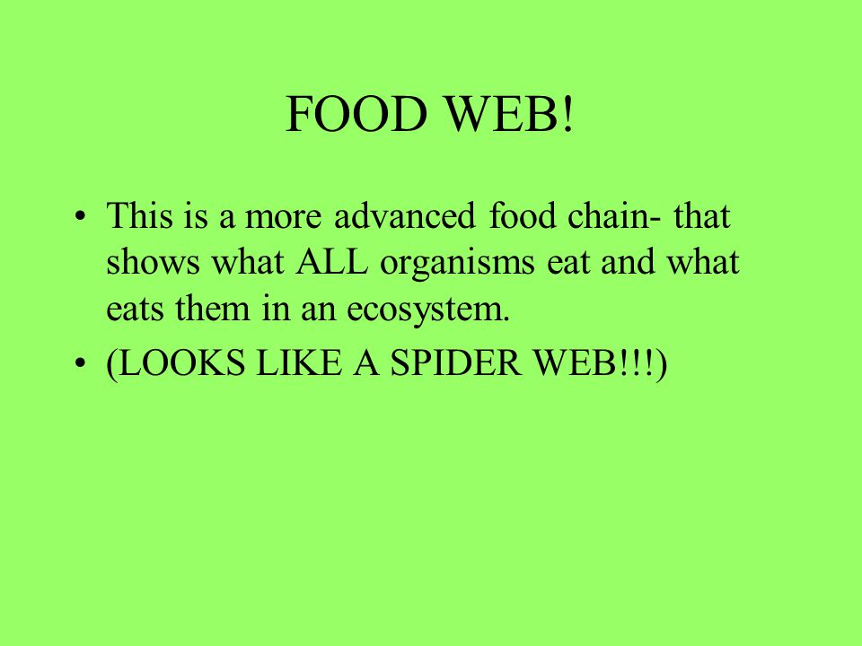 FOOD WEB! This is a more advanced food chain- that shows what ALL organisms eat and what eats them in an ecosystem.