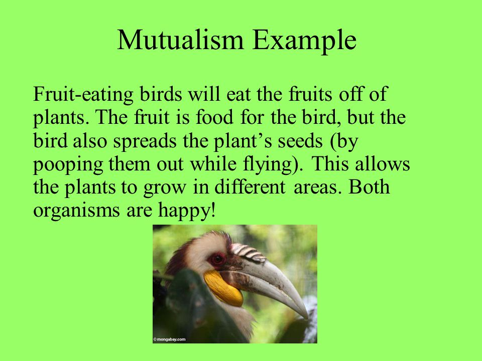Mutualism Example