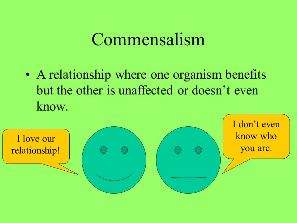 Commensalism A relationship where one organism benefits but the other is unaffected or doesn't even know.