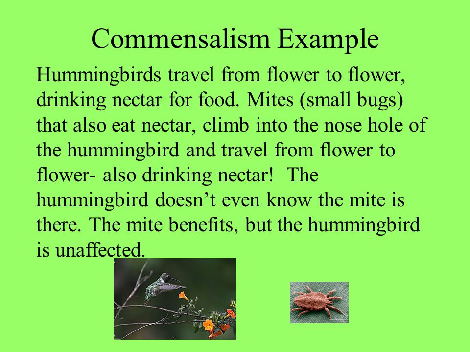 Commensalism Example