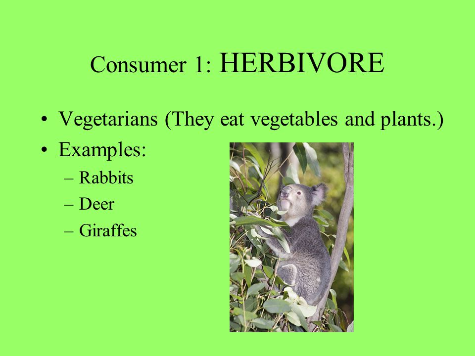 Consumer 1: HERBIVORE Vegetarians (They eat vegetables and plants.)