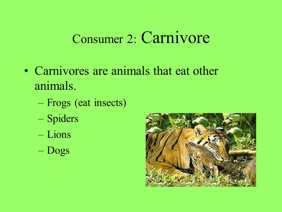 Carnivores are animals that eat other animals.