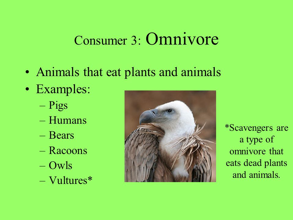 *Scavengers are a type of omnivore that eats dead plants and animals.