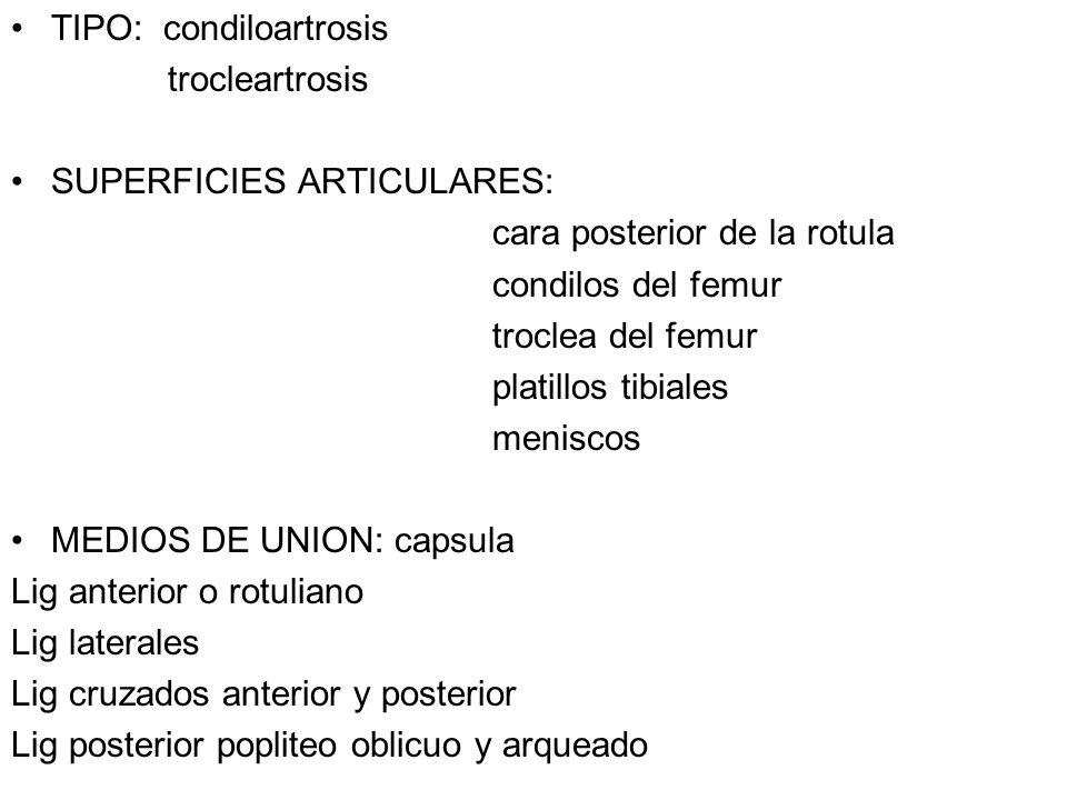 TIPO: condiloartrosis