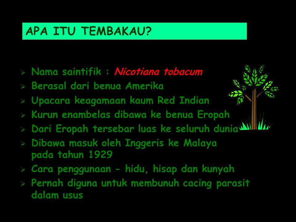 APA ITU TEMBAKAU Nama saintifik : Nicotiana tobacum