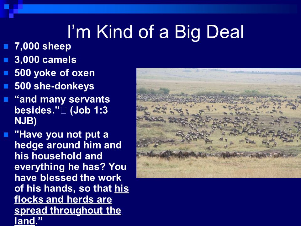 I'm Kind of a Big Deal 7,000 sheep 3,000 camels 500 yoke of oxen