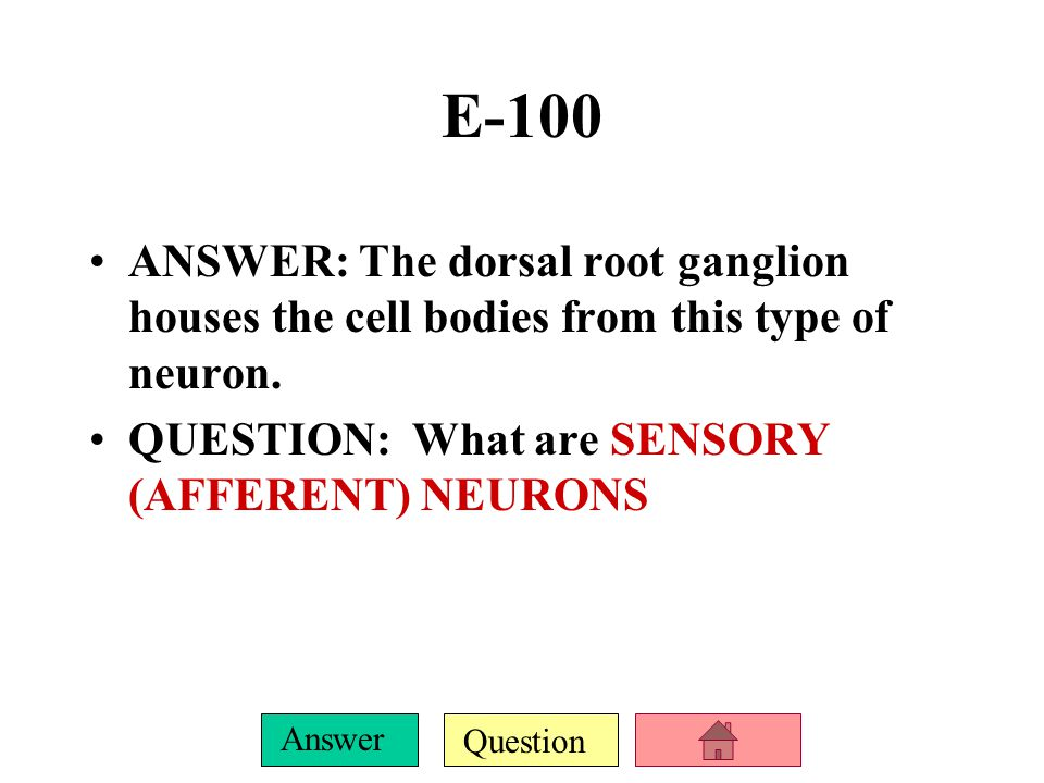 E-100 ANSWER: The dorsal root ganglion houses the cell bodies from this type of neuron.