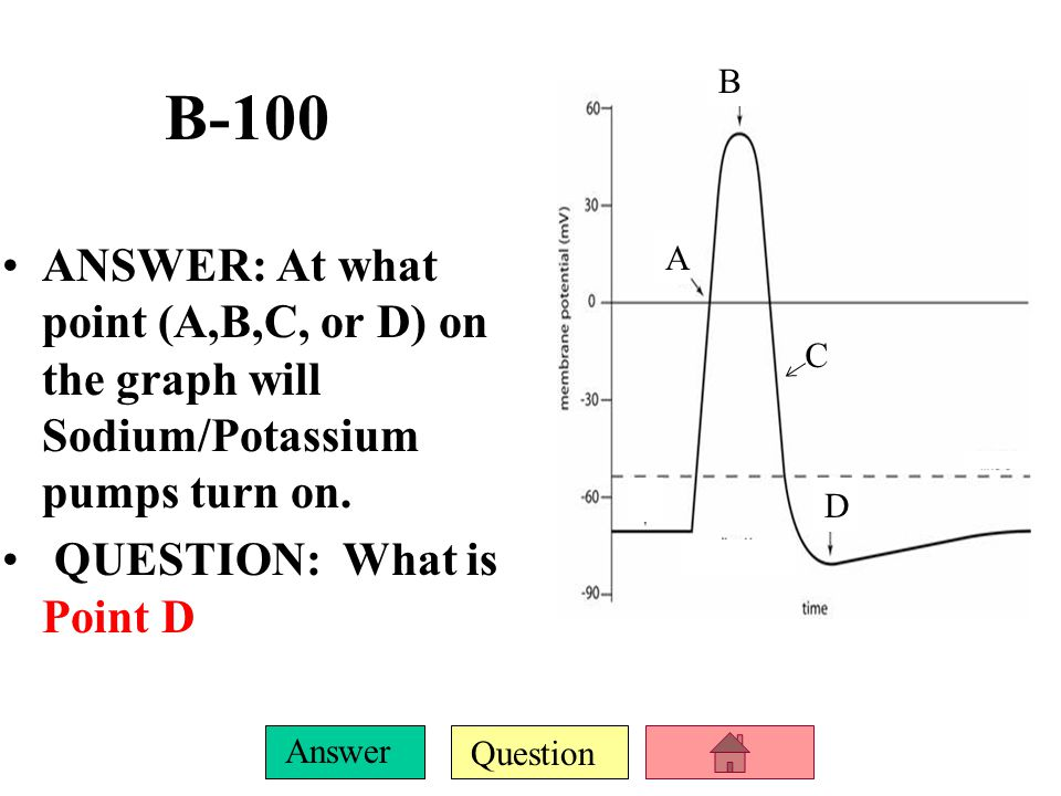 B B-100. ANSWER: At what point (A,B,C, or D) on the graph will Sodium/Potassium pumps turn on. QUESTION: What is Point D.