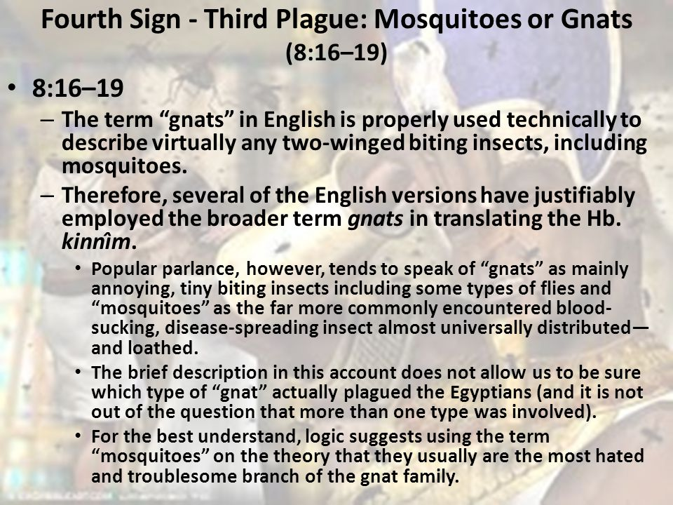 Fourth Sign - Third Plague: Mosquitoes or Gnats (8:16–19)