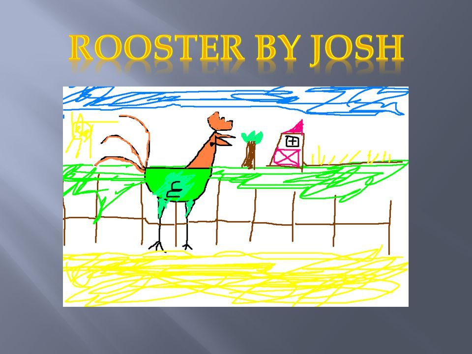 Rooster by josh