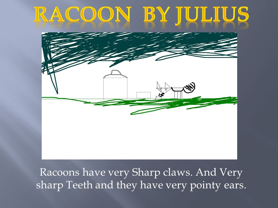 Racoon by julius Racoons have very Sharp claws.