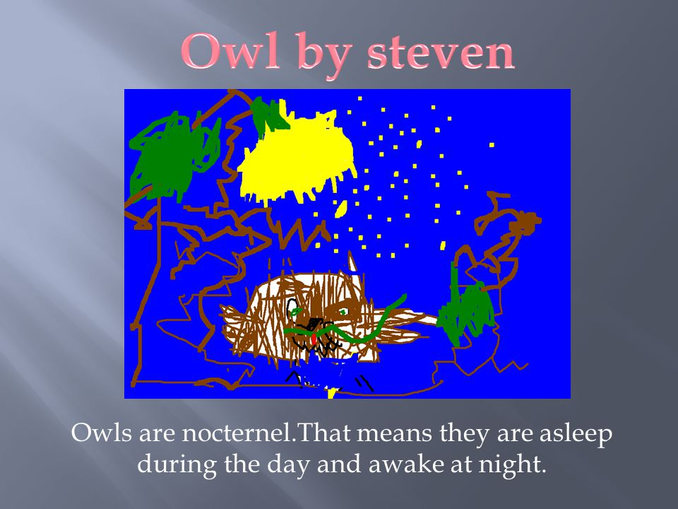 Owl by steven Owls are nocternel.That means they are asleep during the day and awake at night.