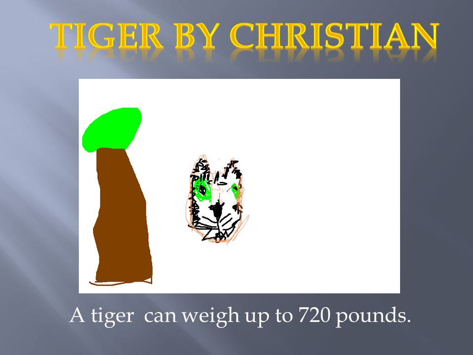 A tiger can weigh up to 720 pounds.