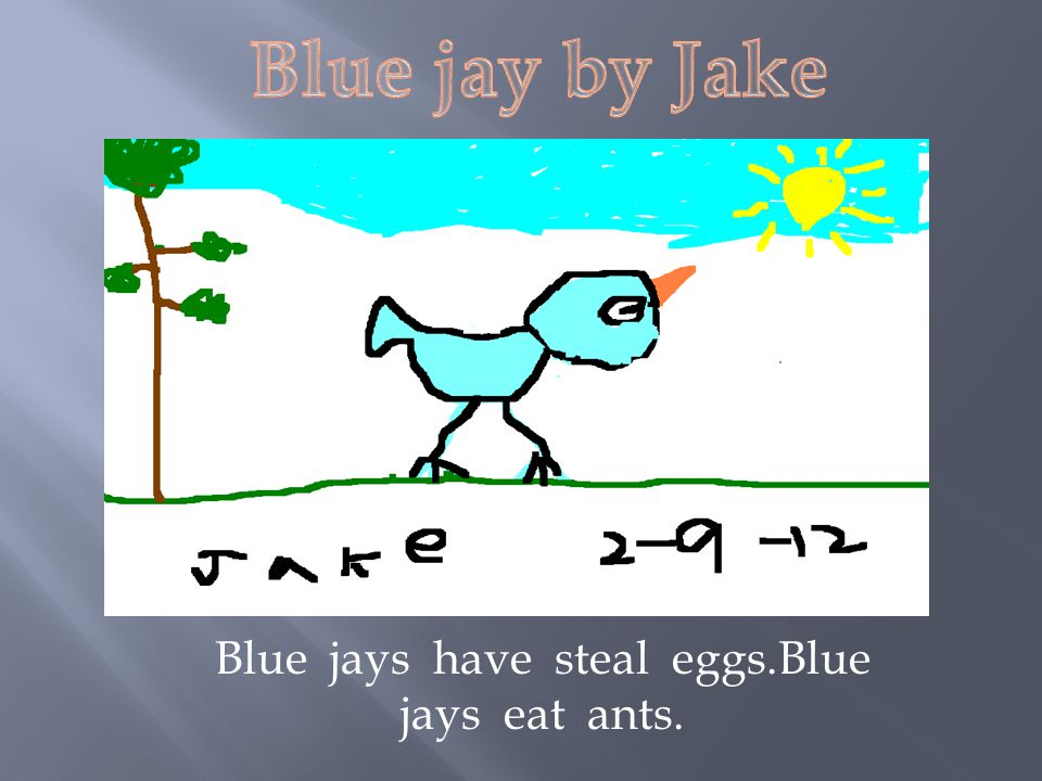 Blue jays have steal eggs.Blue jays eat ants.