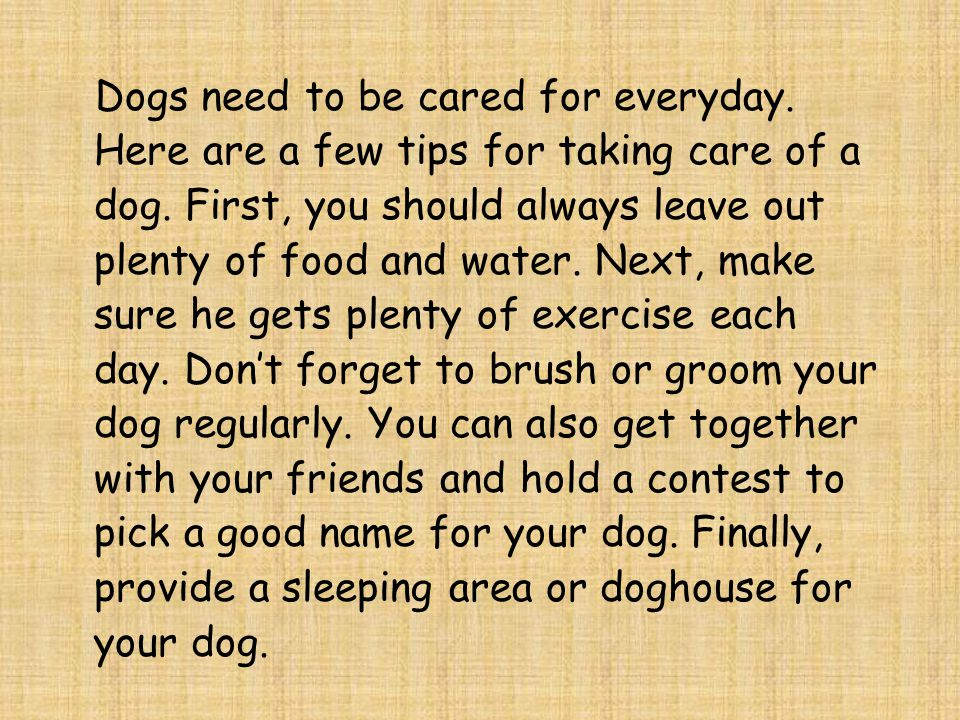 Dogs need to be cared for everyday