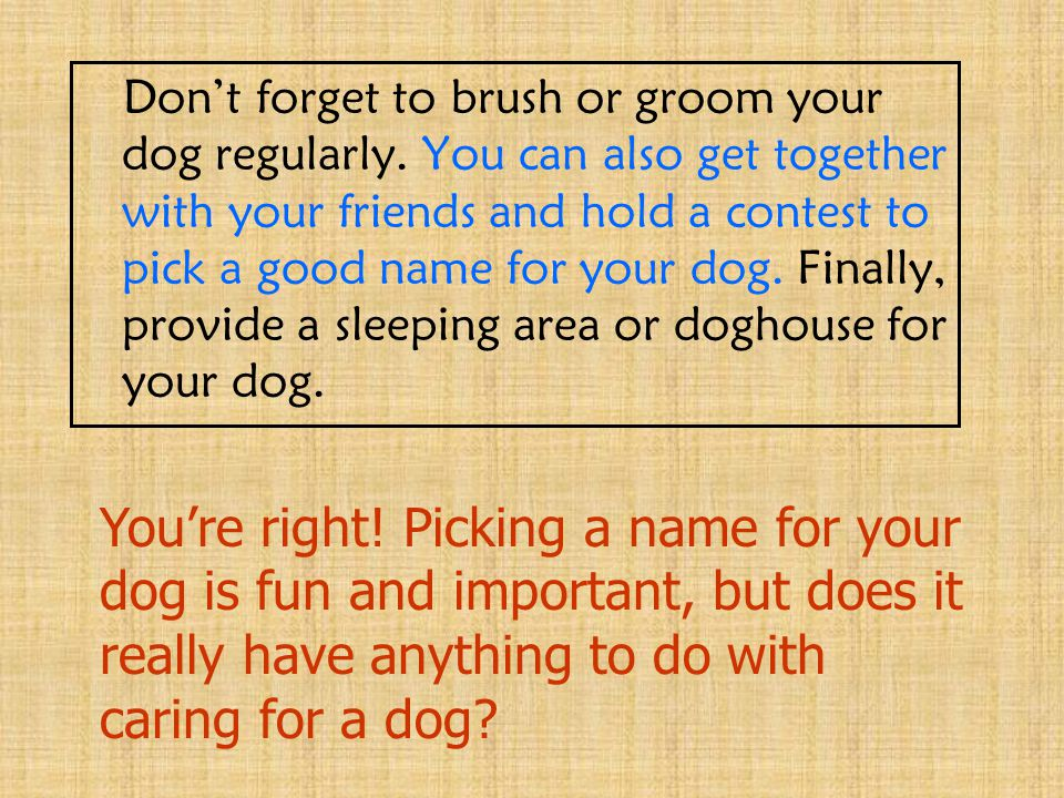 Don't forget to brush or groom your dog regularly