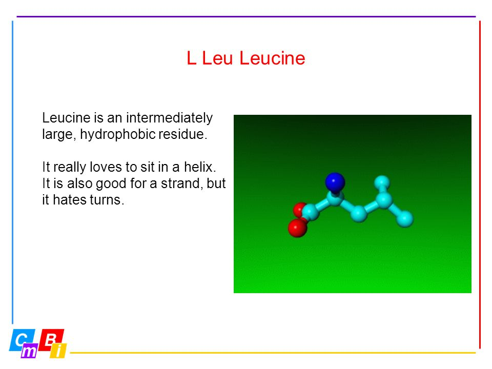 L Leu Leucine Leucine is an intermediately large, hydrophobic residue.