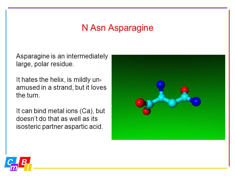 N Asn Asparagine Asparagine is an intermediately large, polar residue.